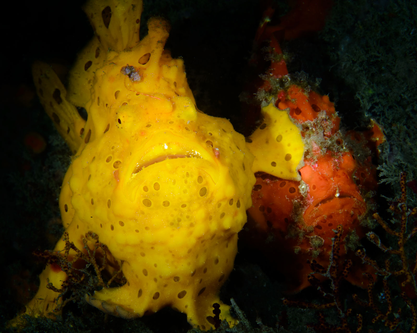 Jim Chen won the Underwater category with these frogfish.