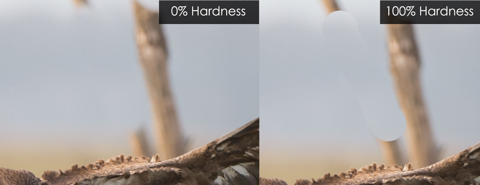 brush hardness comparison