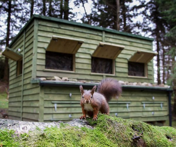 red-squirrel-hide-hire-6