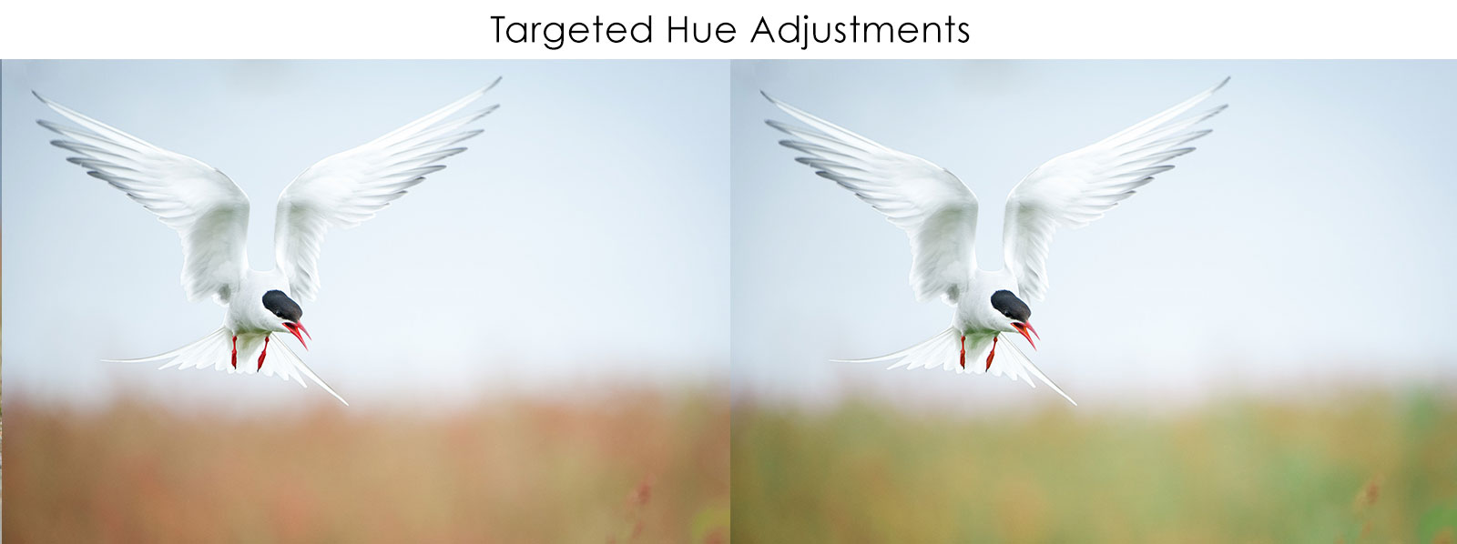 lightroom colour correction hue saturation luminance nature ttl targeted adjustments allow you to alter a specific colour more so than the preset options