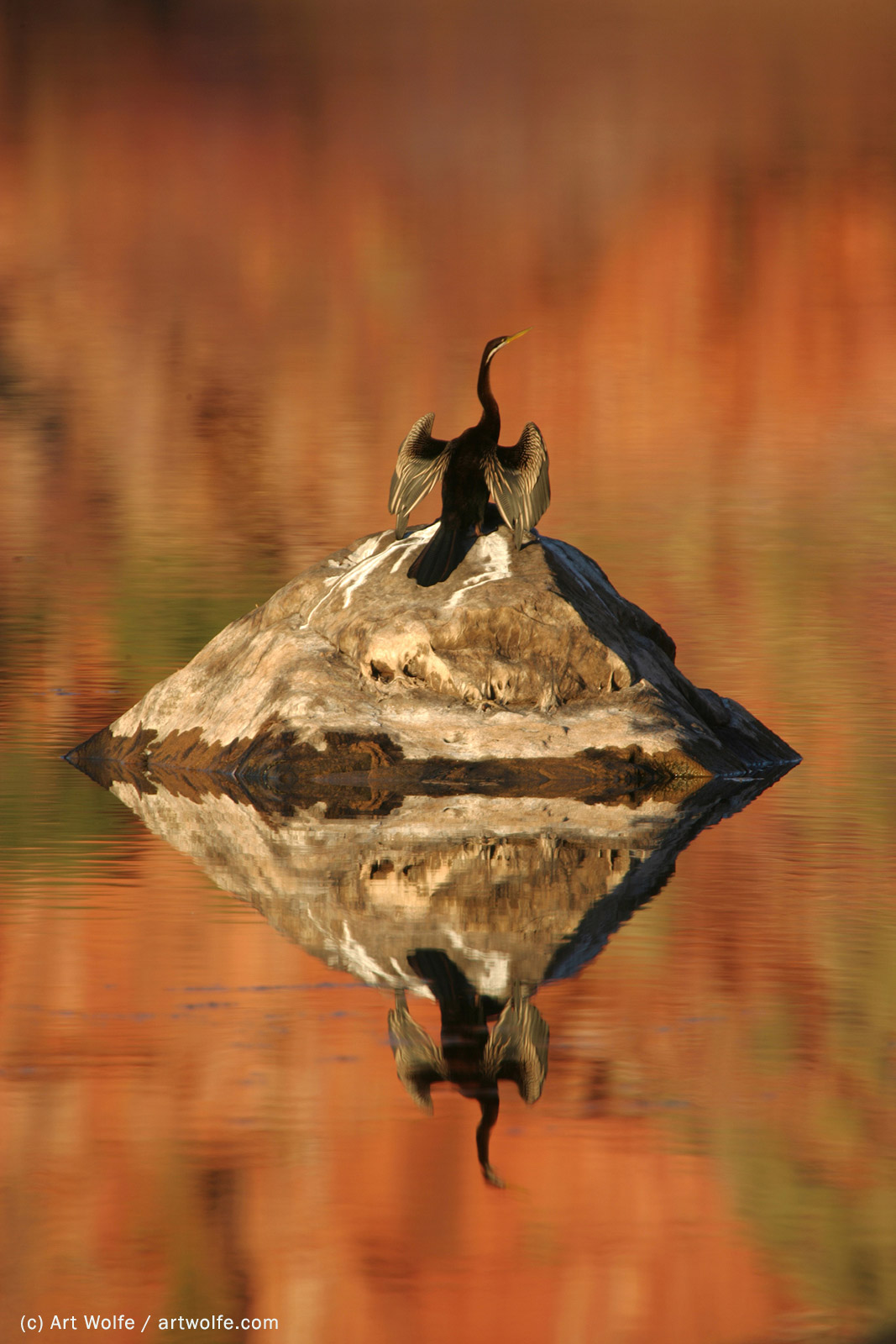 landscape composition tips art wolfe
