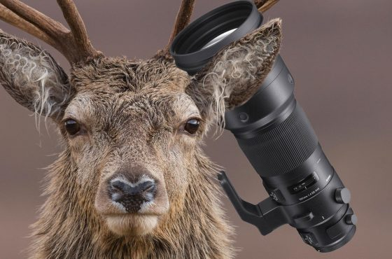 featured-sigma-500mm-sport-review-wildlife-photography-20