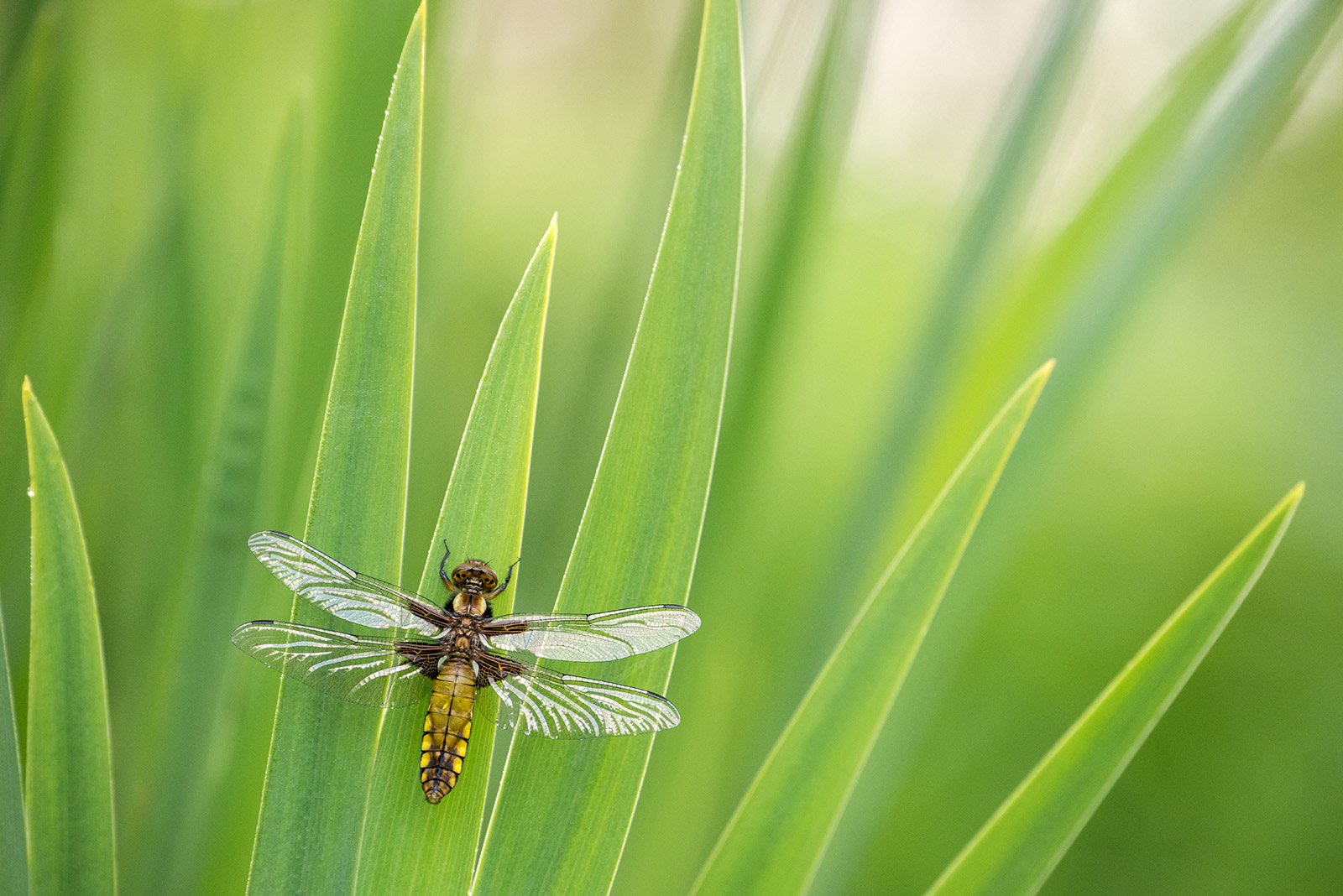 photograph dragonflies