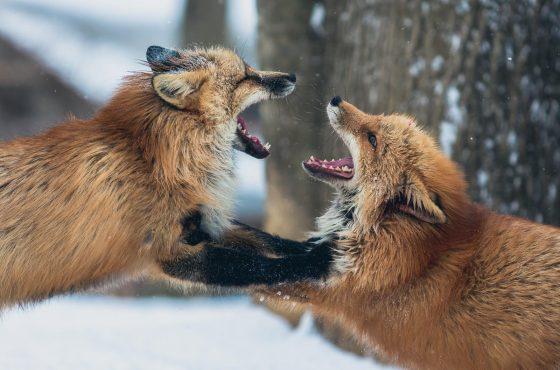 best-lens-wildlife-photography-3