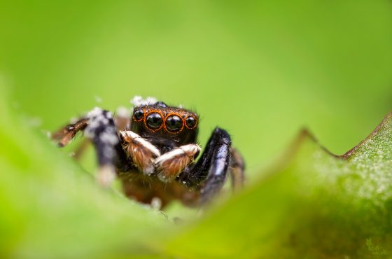 how-to-photograph-spiders-2