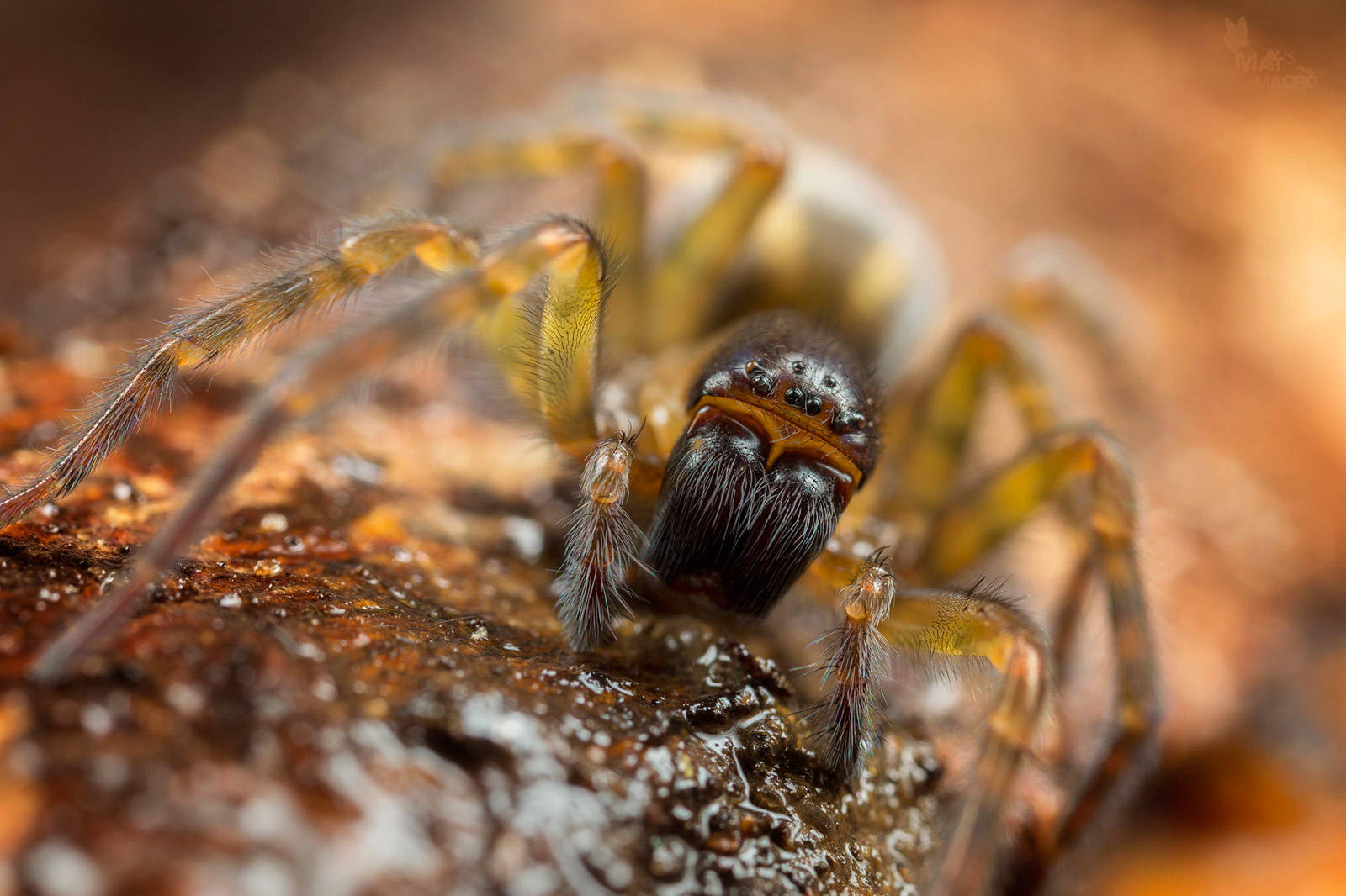 how to take a macro photo of spiders