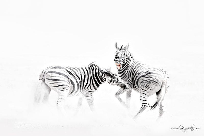fine art wildlife photos