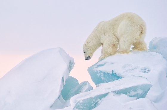 SvalbardWinter2017-15889-Edit-Print-MoabSMR-RelCol