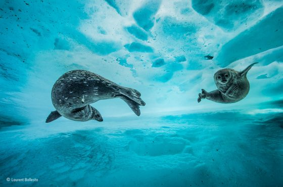 Swim gym © Laurent Ballesta – Wildlife Photographer of the Year