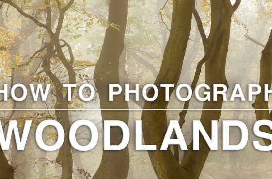 how to photograph woodlands