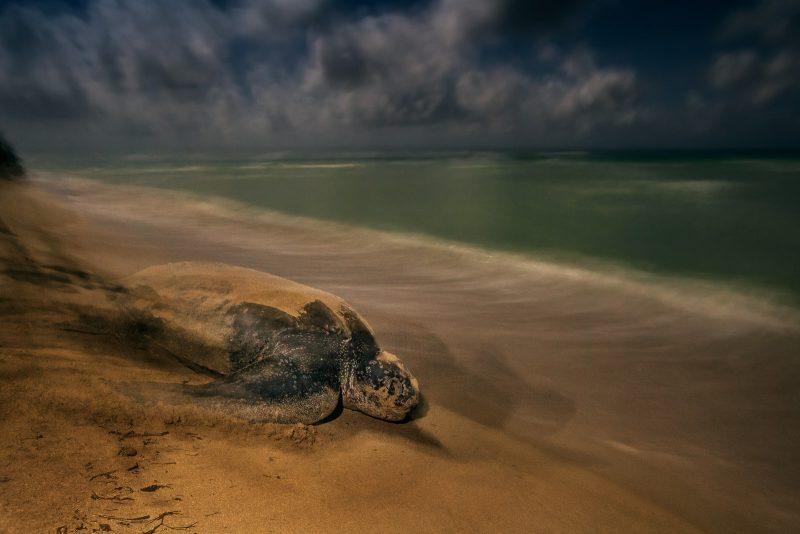 Wildlife Photographer of the Year winners 2017
