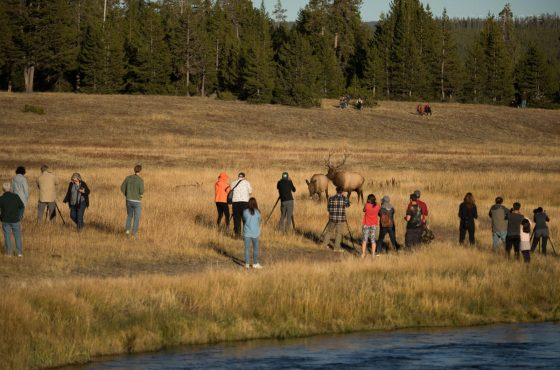 yellowstone-deer-opinion