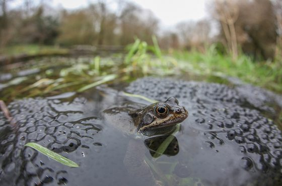 toads-and-frogs-photography-3