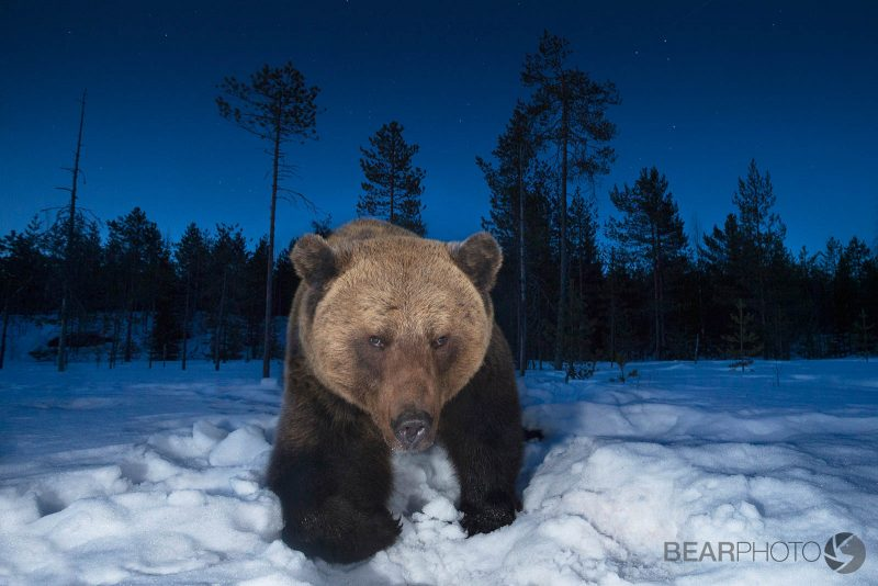 bearphoto bear tours finland