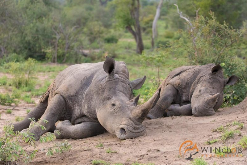 South Africa conservation photography African impact