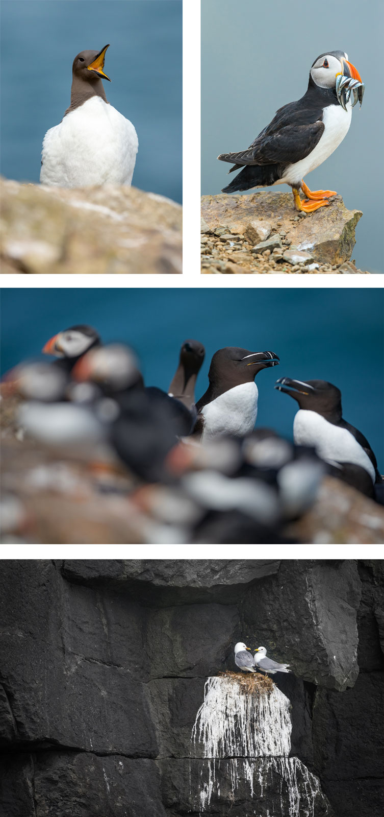 seabird photography tips
