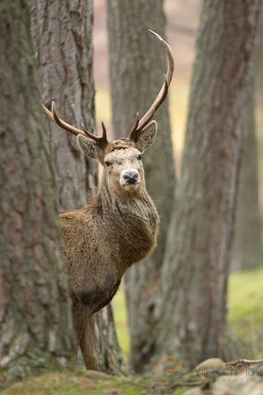 tips for approaching wildlife