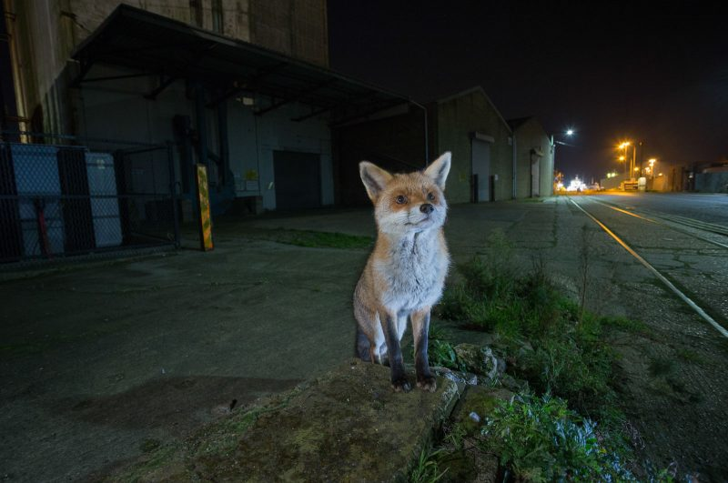 urban wildlife photography tips