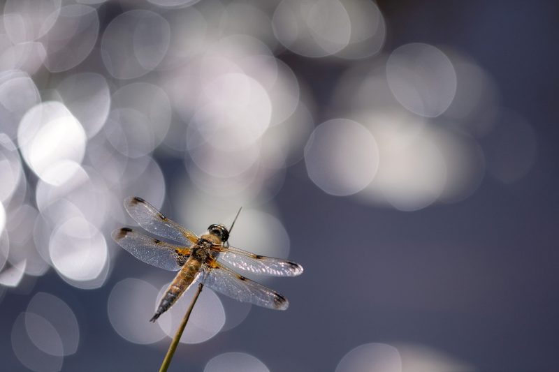 How to Get Close to a Macro Subject