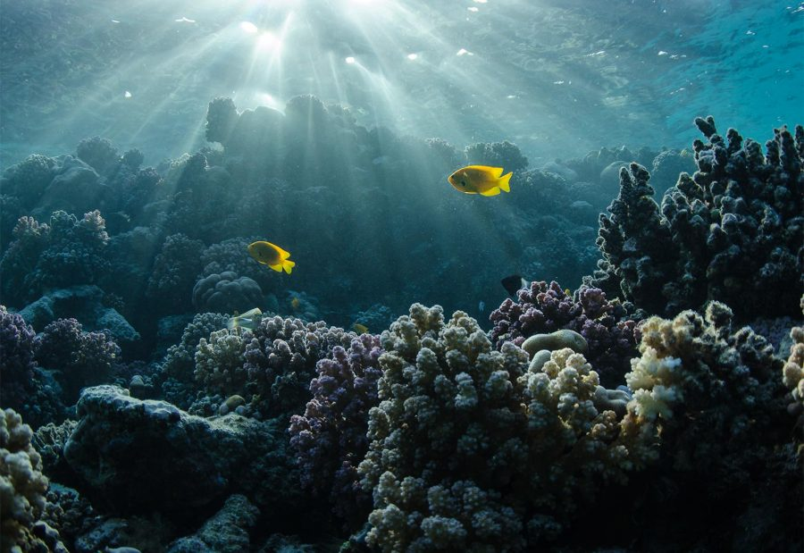 Avoiding backscatter in underwater photos