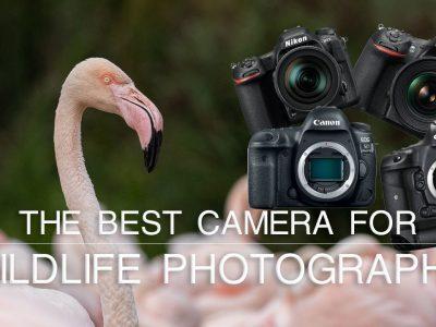 best camera wildlife photography