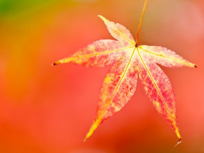 How to photography autumn close ups