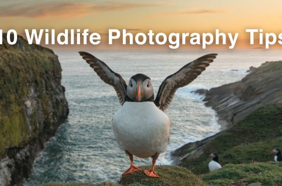 wildlife-photography-tips