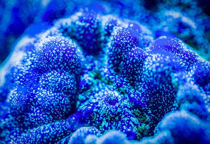 photographing Underwater Fluorescent Coral Underwater