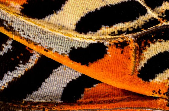 butterfly-wings1