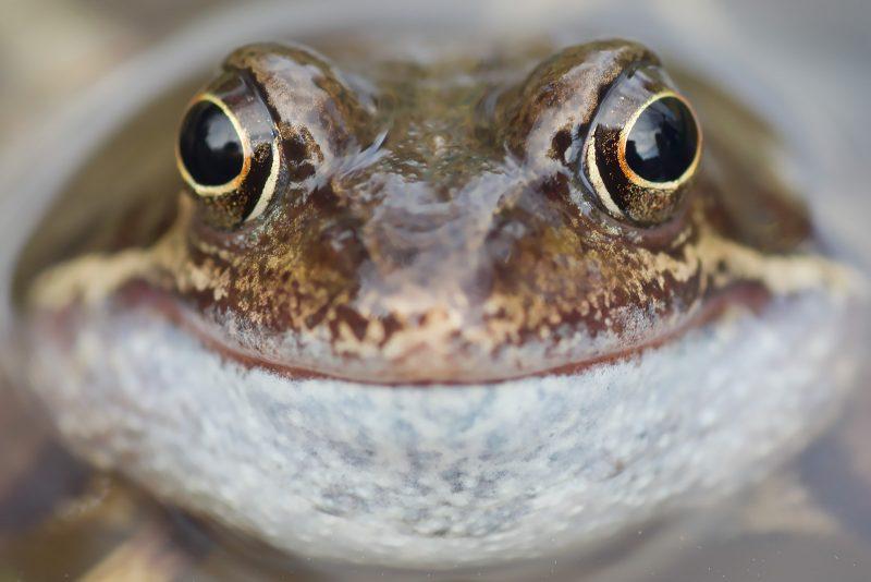 photographing wildlife backyard tips