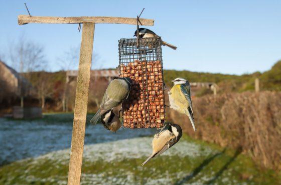photograph wildlife in your backyard