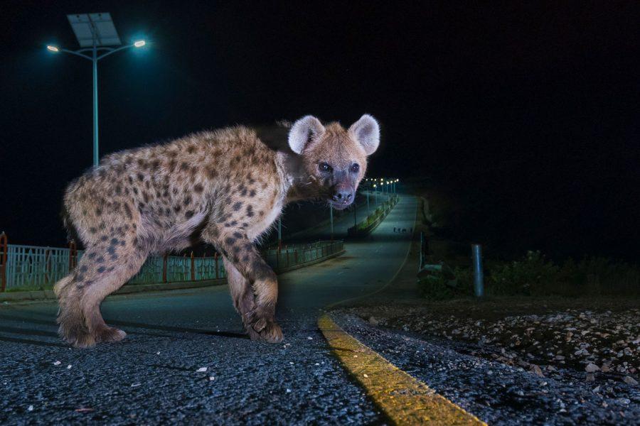 Urban wildlife photography