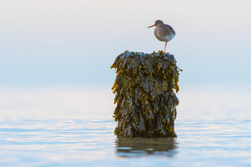 photographing wading birds