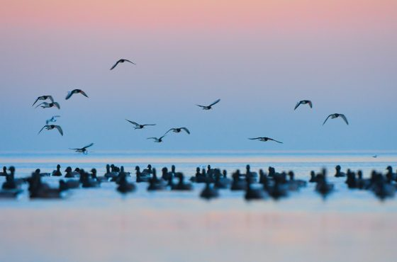 photographing-wading-birds-8