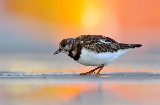 find-locations-wildlife-photography-3