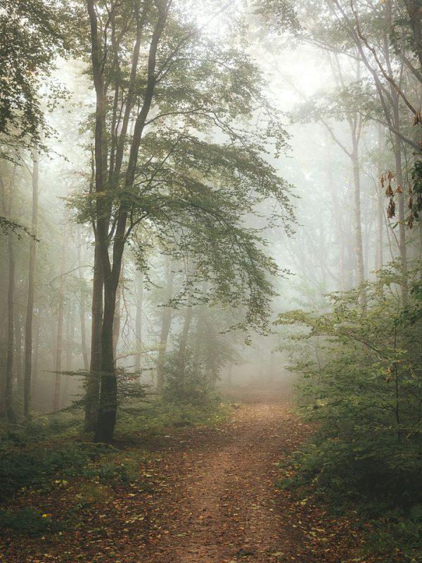 photograph landscapes rain