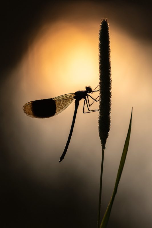 photography-ethics-freezing-insects-for-macro