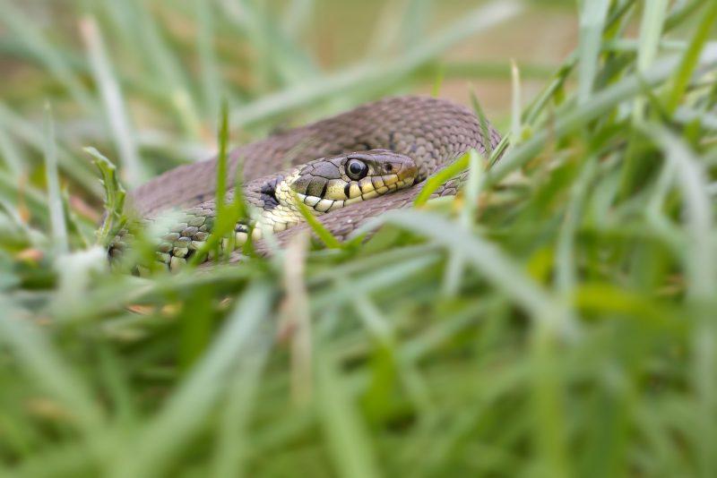 photograph-reptiles-uk