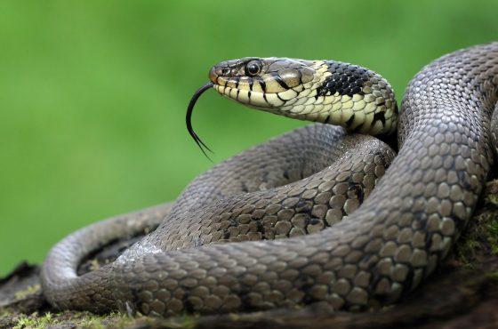 photograph-reptiles-uk-4