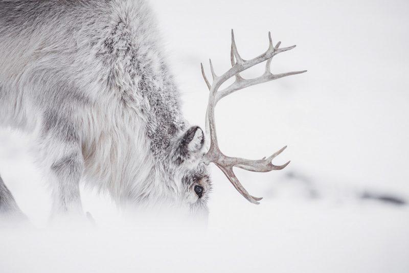 photograph wildlife polar regions