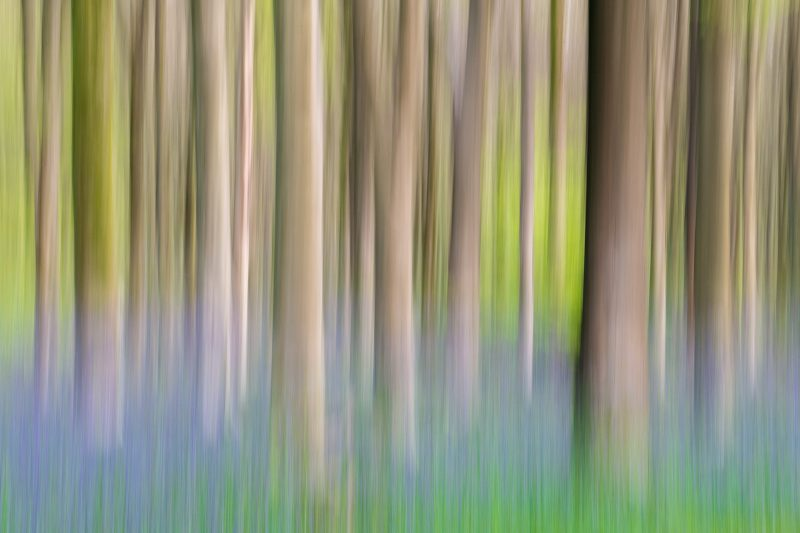 Trees photographed using ICM