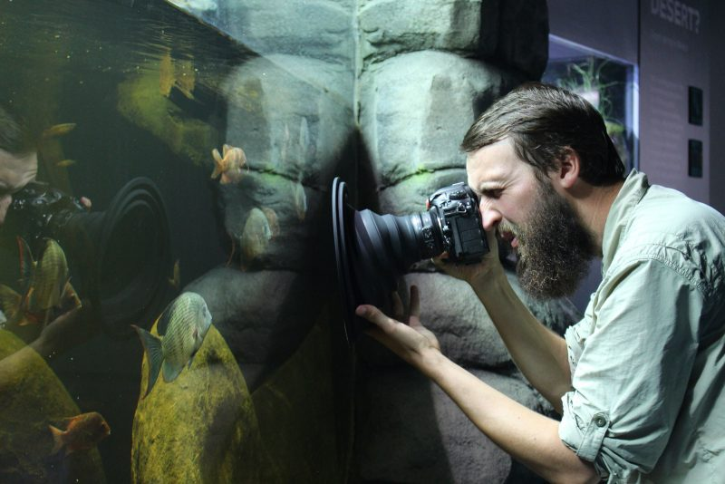 Photographing freshwater fish in a tank