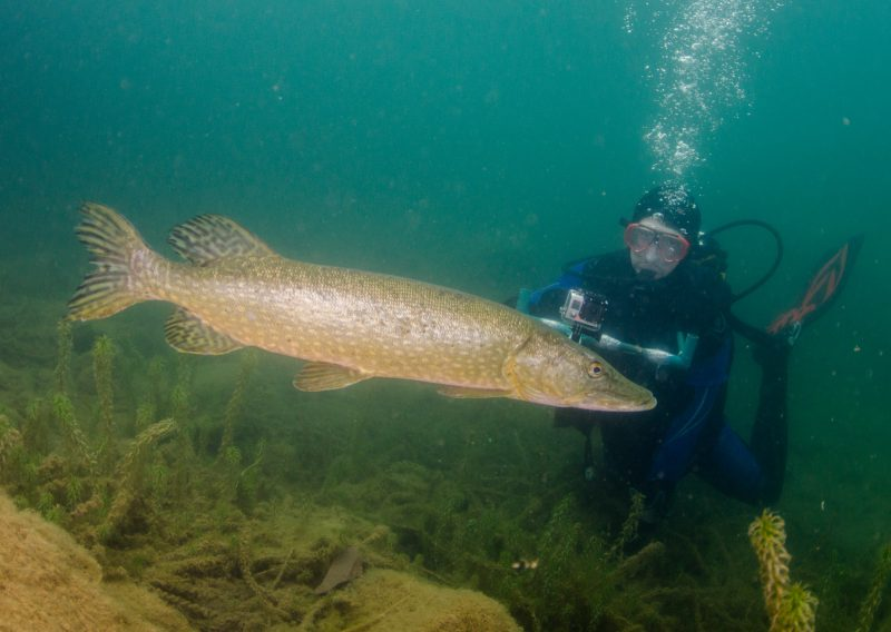 Diving with freshwater of fish