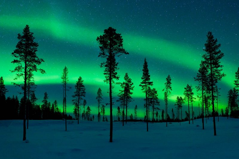 Trees in front of the aurora