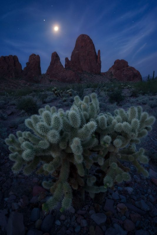 Cactus in the moonlight