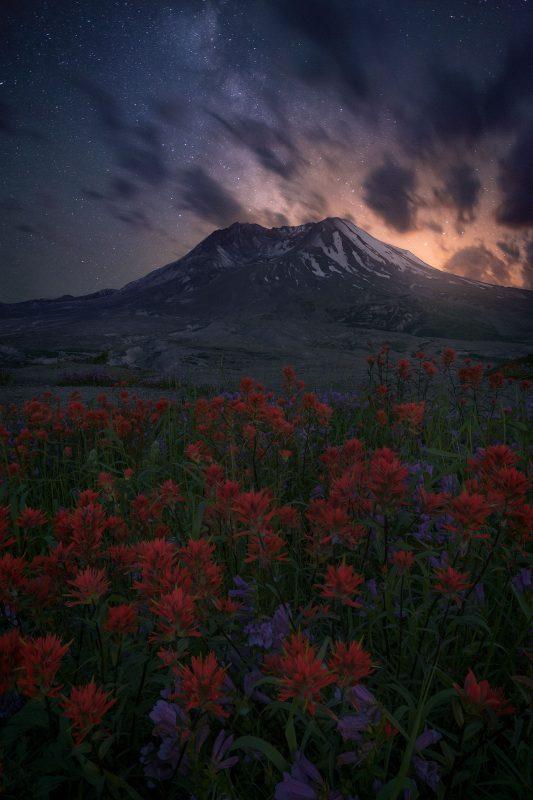 Night-scape of a red flower field below a mountain