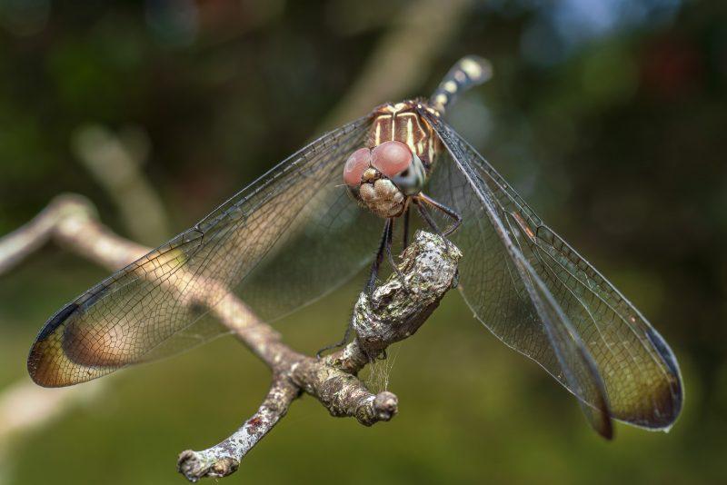 Dragon fly on branch