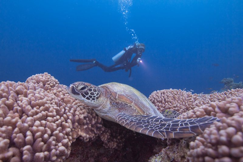 Diving with a turtle