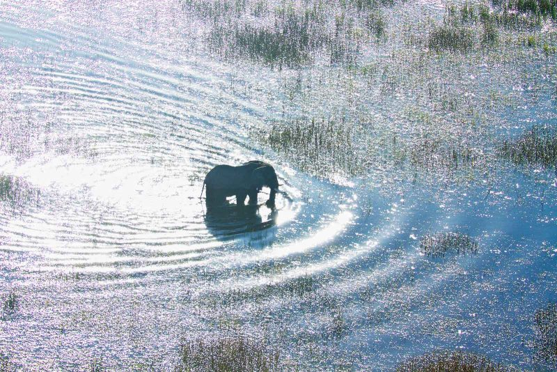 Elephant in water photographed from above