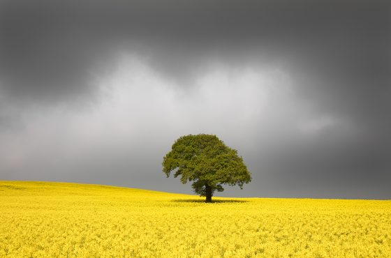 landscape-photography-in-yorkshire-guide